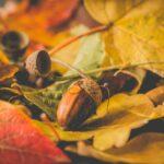 jesen_v_polnem_teku
